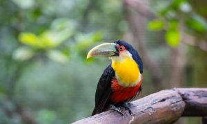Top Tourist Attractions in Amazonas
