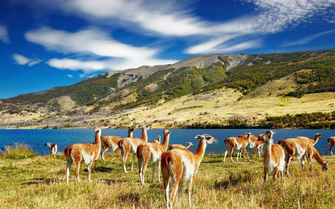 Torres del Paine National Park, Laguna Azul, Chile via Shutterstock*