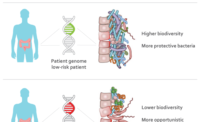 Mutations in the human genome may cause shifts in the gut bacteria of patients with inflammatory bowel disease. (Dan Knights/University of Minnesota)