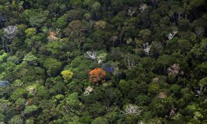 Growth of Forests Not Equal To Rising CO2 Levels