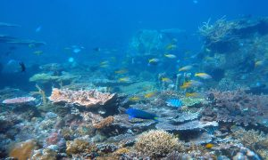 Coral Reefs Threatened by a Deadly Combination of Changing Ocean Conditions