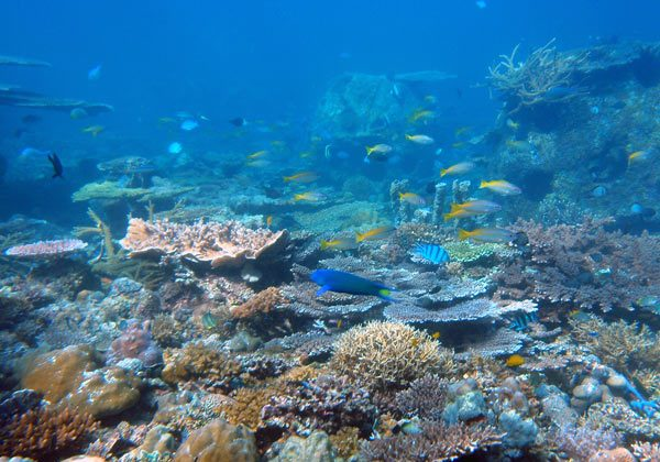 Many species, not just human beings, depend on coral reefs for sustenance and protection. Photo credit: Curt Storlazzi.