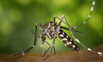 New Antibody Adds to Arsenal Against Dengue
