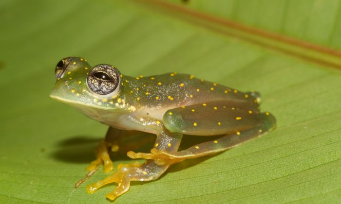 Many groups of ectotherms, which make up more than 90 percent of all animals, are able to change their physiological function to cope with an altered environment, but the rapid pace and fluctuations of human-induced climate change present serious challenges to acclimation.  (Brian Gratwicke, CC BY)