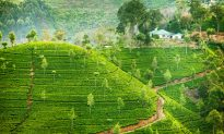 Exotic Cruise Holiday Destinations in Sri Lanka