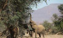 Why Are Cameroon's Elephants Raiding Fields?