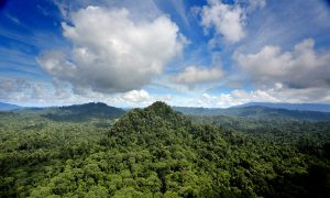 Tropical Deforestation Could Disrupt Rainfall Globally