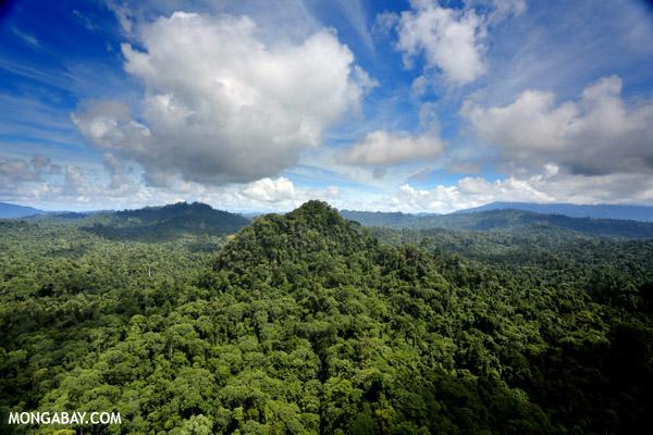 Rainforest in Sabah, Malaysia. Photo by Rhett A. Butler.