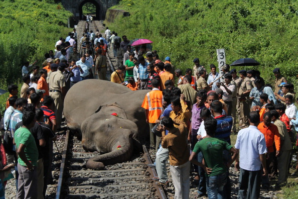 Indian villagers, along with forestry workers, look at the body of an elephant as it lies on the railway tracks after it was struck by a passenger train at Mongpong village, near Mahananda Wildlife Sanctury, some 25 kms from Siliguri on October 11, 2013. (Diptendu Dutta/Getty Images)