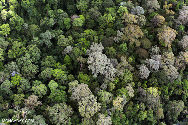 Rainforest in Borneo. This year saw lots of news, much of it potentially positive, for the world's tropical forests. Photo by: Rhett A. Butler.