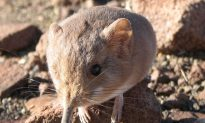 New Species Discoveries in 2014, Part II