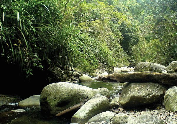 A tributary of the Taranaban River in Palawan, where a new species of spider water beetle was discovered in 2011. Photo by By Hendrik Freitag & Michael Balke.