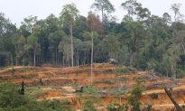 Palm Oil Expansion in Phillipines of Serious Concern
