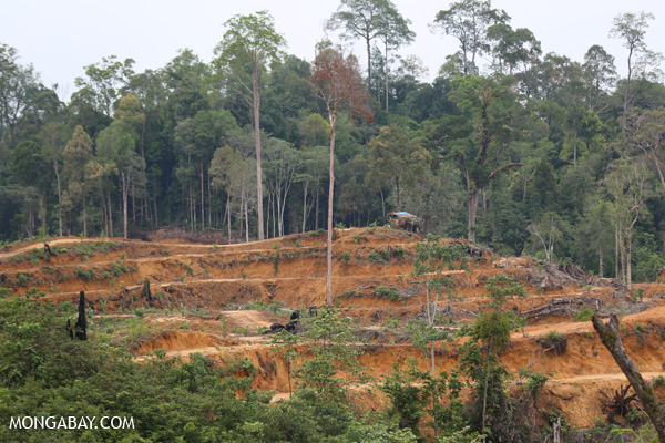 Deforestation for a palm oil plantation in Sumatra, Indonesia. Such practices are starting up in Palawan. Photo by Rhett A. Butler.