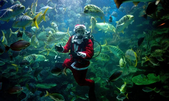 A diver wearing a Santa Claus outfit feeds fish inside a tank at the Aquaria KLCC in Kuala Lumpur on Dec. 16, 2014. (Manan Vatsyayana/AFP/Getty Images)
