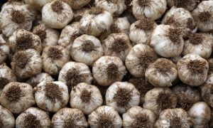 Garlic: How To Plant, Grow, and Harvest