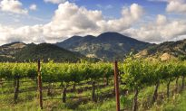 Top Things to Do in California