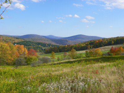 Fields on Mauer's Mountain Farms, in the Catskills, N.Y. (Courtesy of Mauer's Mountain Farms)