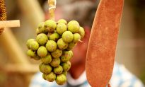 Forest Food of Indian Tribes Can Overcome Nutrition Crisis