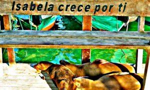 Exploring Isabela Island Galapagos