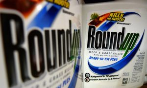 Glyphosate Causing Autism? MIT Researcher Claims Herbicide Will Cause Half of All Children to be Autistic