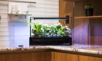 Countertop LED Grow Box Puts a Garden in Your Kitchen