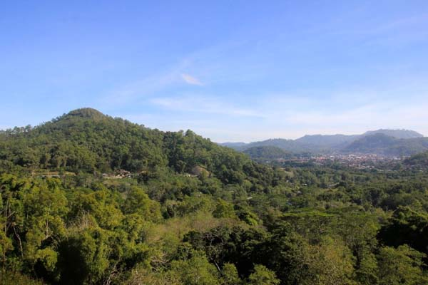 Forest surrounding the Wata Ata region in Flores, Indonesia. Photo by Anton Muhajir.