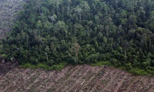 Half of Indonesia's Deforestation Outside Concessions