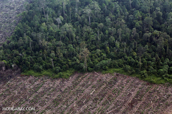 Deforestation in Riau. Photo by Rhett Butler