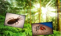Wave of New Diseases Being Brought to America by Insects