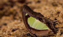 Tiny National Park Showcases Huge Butterfly Diversity