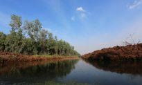 Indonesia Dilemma: Palm Oil vs. Peatland Protection