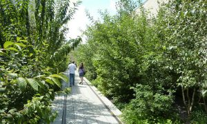 Walking the High Line – New York City