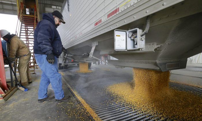 Corn is delivered to the Green Plains ethanol plant in Shenandoah, Iowa., on Jan. 6, 2015. Roughly 100 trucks a day filled with corn flow into the ethanol plant in southwest Iowa even as crude oil prices continue to collapse. Oil prices may have dipped below $50 a barrel for the first time since April 2009, but ethanol plants across the nation continue to operate at a brisk pace in order to satisfy a domestic and export demand that hasn't weakened. (AP Photo/Nati Harnik)