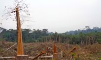 Kalimantan Community Stops Logging in Indonesia