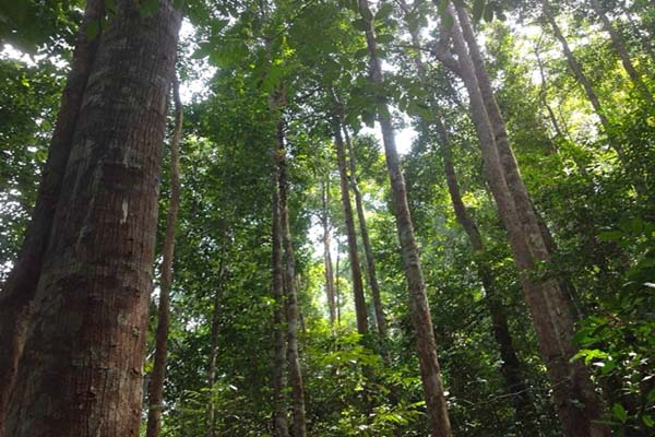 Community-maintained forest in Delang District, Central Kalimantan, Indonesia. Photo by Indra Nugraha.