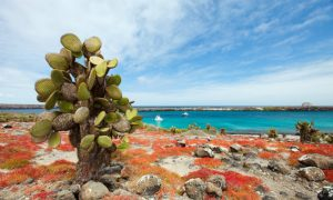 Getting to the Galapagos Islands