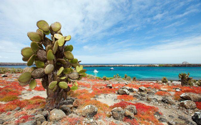 Galapagos South Plaza island via Shutterstock*