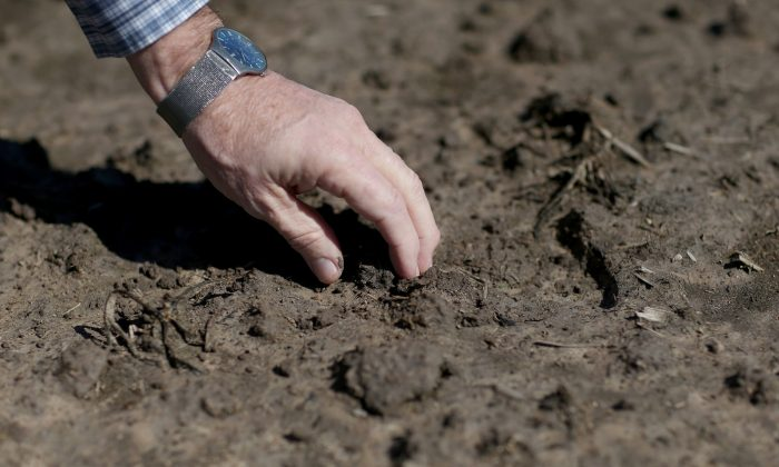 LISSIE, TX - MARCH 12: Ronald Gertson, a fourth generation rice farmer, touches the soil in his rice field that may not be planted this year due to severe drought on March 12, 2014 in Lissie, Texas. Due to a severe drought afflicting the region, the facility closed as farmers like Gertson do not have enough water to grow a sufficient rice crop. Recently the Texas Commission on Environmental Quality agreed to cut off water deliveries to most rice farmers in the Lower Colorado River Basin for the third straight year as the lakes in central Texas are only 38 percent full. (Photo by Joe Raedle/Getty Images)