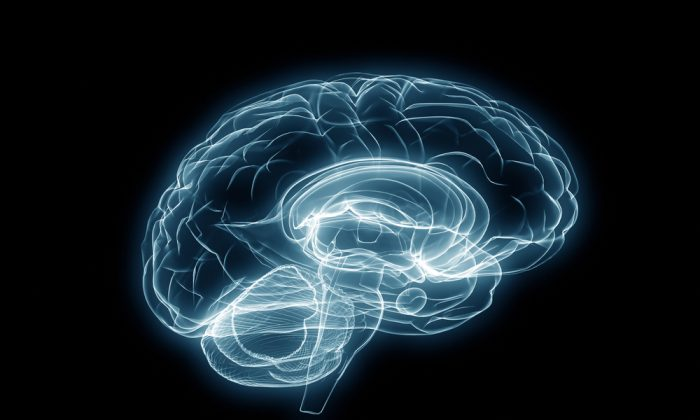 What speaking two languages does to the brain's white matter.