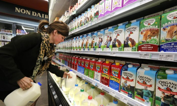 Grocery and dairy assistant Reyna DeLoge stocks dairy products at Vitamin Cottage Natural Grocers, in Denver, on May 23, 2014. After a record year for milk sales in 2014, dairy farmers face a glut. Already disheartened, farmers say they worry as futures markets predict dwindling prices in 2015. But in the dairy aisle shoppers are milking savings. (AP Photo/Brennan Linsley)