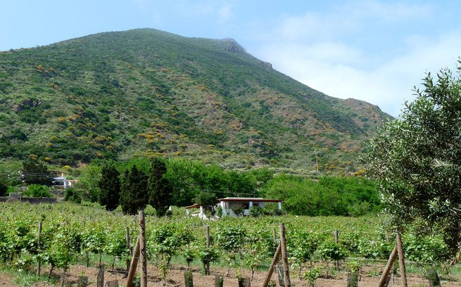 A malvasia vineyard on the island of Salina, Italy. (Manos Angelakis)