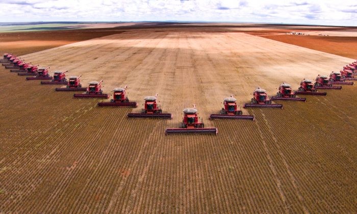 A team of tractors haul in the soybean harvest. Soy is big business, but is it healthy to eat? AFNR / Shutterstock.com