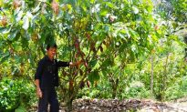 Farmers Help Restore Degraded Forests in Sulawesi