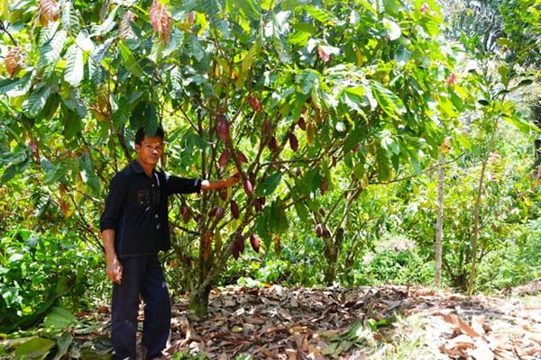 A farmer from the village of Pamulukkang with his cocoa tree. Photo by Revelation Chandra.