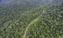 Malaysia Might Stop Granting Logging Concessions