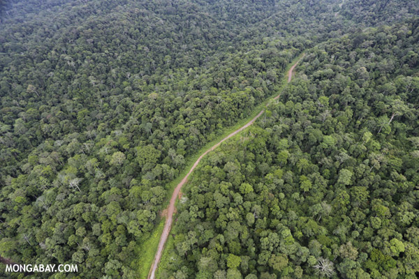 Logging road in neighboring Sabah. Legal logging has caused substantial forest loss and degradation in Sarawak over the past 30 years, depleting canopy cover, altering forest structure, exacerbated hunting, and driving conversion to plantations.