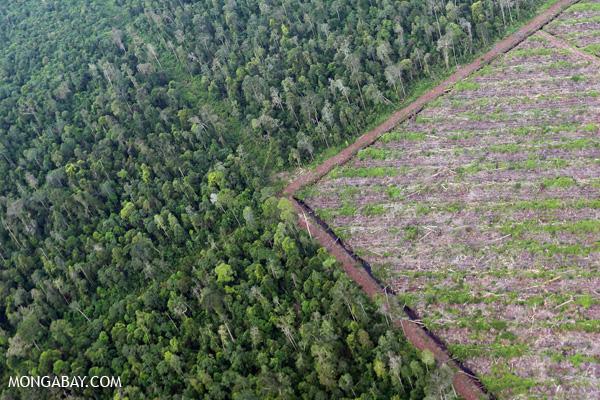 Deforestation in Riau, Sumatra in 2014. (Rhett A. Butler)