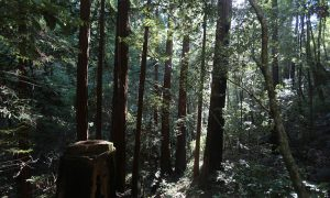Changing California Forests May Help Us Prepare for the Future