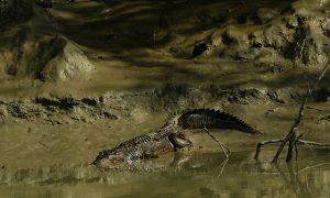 Sundarbans Still Reeling From Effects of December Oil Spill